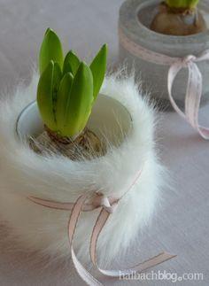 halbachblog I Frühling I Hyazinthe in kuscheliger Fellhülle