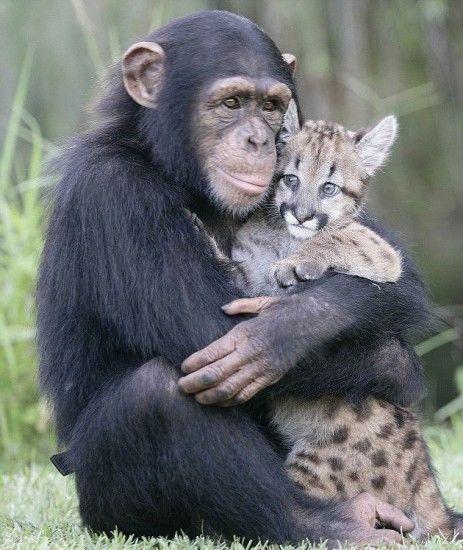 Animal Friendship, Kitty Cat, Best Friends, Sweets, Monkeys, Bestfriends, Cubs, Cuddling Buddy, Needs A Hug