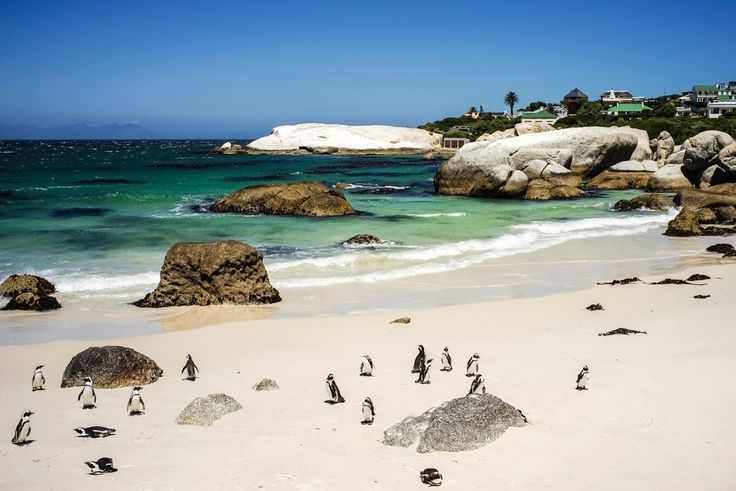 Boulders Beach in Table Mountain National Park, South Africa.
