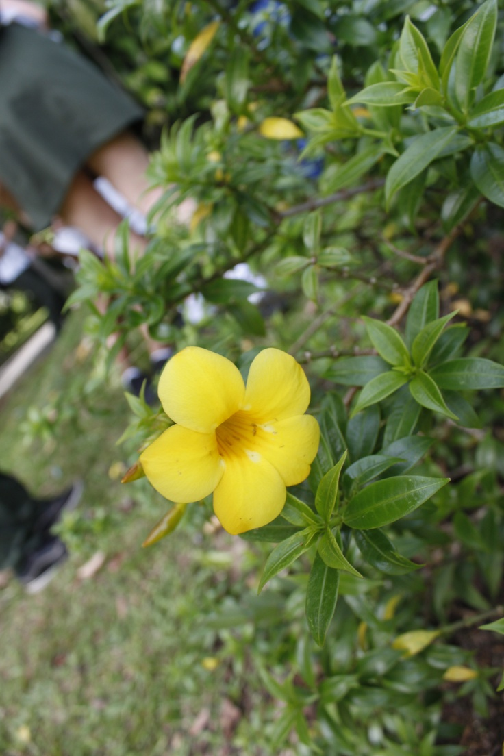 Yellow flower – Unfocused shot, focusing on flower and some leaves only.