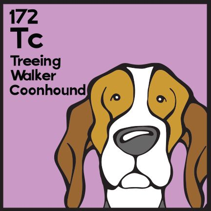The 172nd Elemutt of The Dog Table is the Treeing Walker Coonhound.  The Dog Table Poster features illustrations of 186 dog breeds. Dogs are organized in a similar layout and structure to the Periodic Table.  #dogsofpinterest #TreeingWalkerCoonhound BUY THE DOG TABLE POSTER  http://thedogtable.com