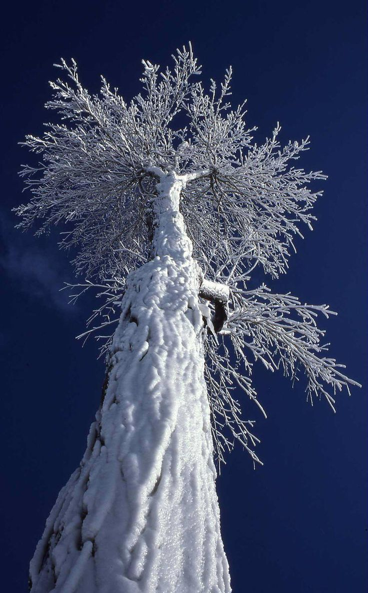 Snow covered tree. - Winter: