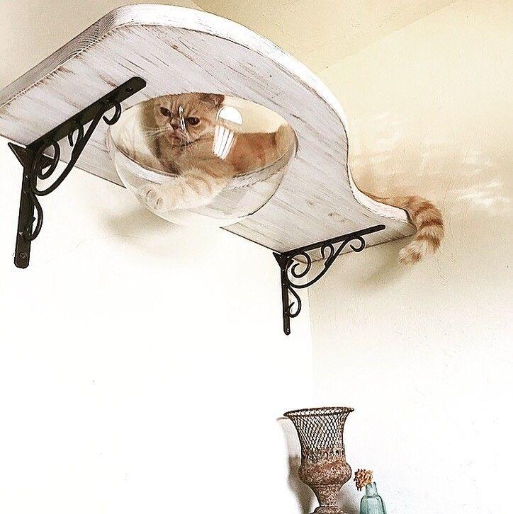 下から見える肉球が可愛すぎ 猫好きさんにはたまらない ボウルカウンターのキャットウォークを作りました スペースキャット 猫 インテリア ねこ インテリア