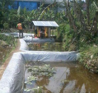 SECELENG: Cara Membuat Kolam Budidaya Ikan Nila Paling Prakt...