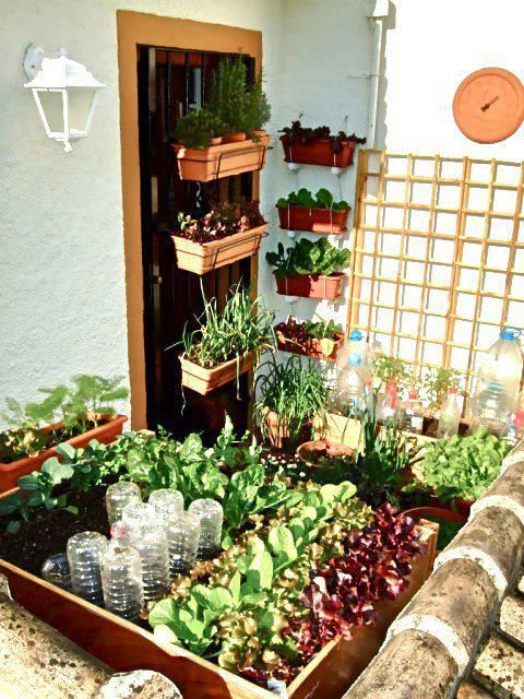 This very small balcony garden only uses 3 square yards of space and produces 21 varieties of food!