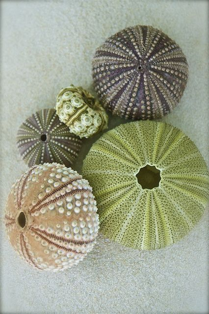 "sea urchin shells were the inspiration for my late night drawing which i am actually posting to my ""my work"" board bc i never do and why not?"