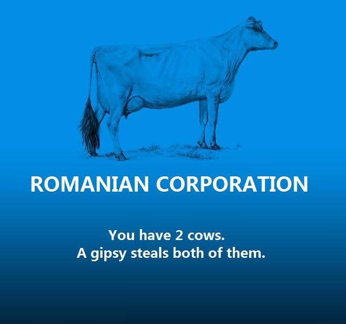 25 Best Politics Images On Pinterest Politics Cow And