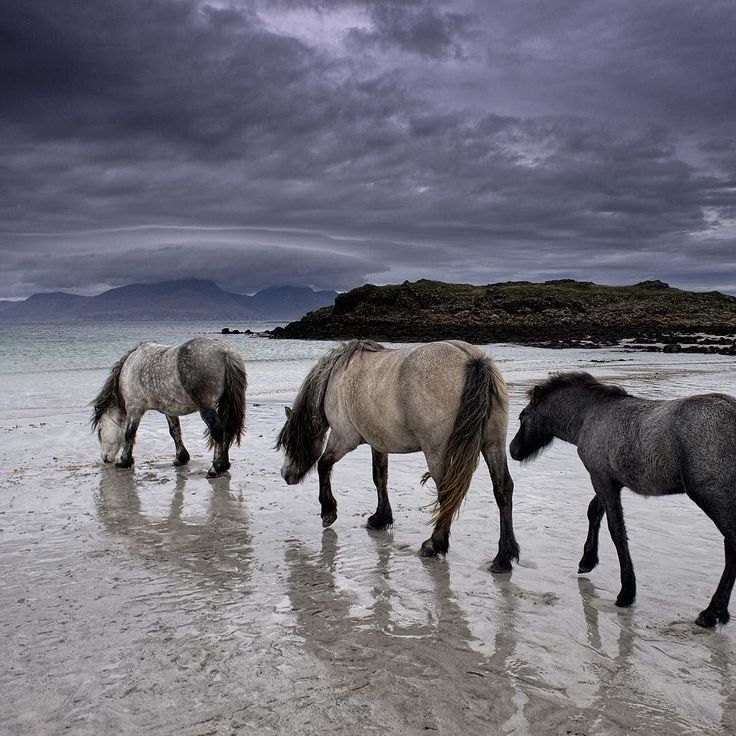 In certain places, dreams of Photographers sometimes come true.  My dreams are haunted with moments when the World is laid bare, when total immersion is rewarded with an instant of clear, seeing horses reflected on the beach sands at low tide on the Isle of Muck. Sinister clouds swirling around distant Rum.