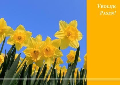 Vrolijke kaart met foto van narcissen in bloei en de tekst 'Vrolijk Pasen'.