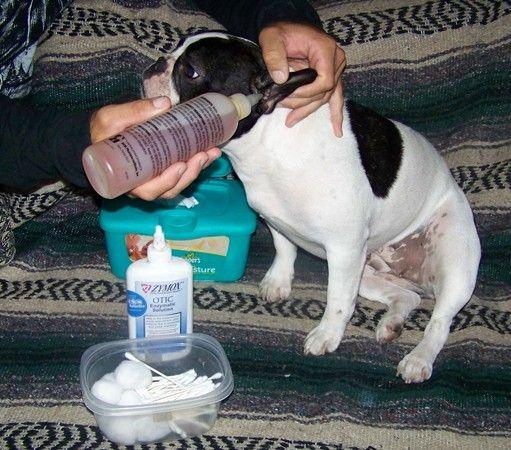 Dog Ear Cleaning Solution Apple Cider Vinegar