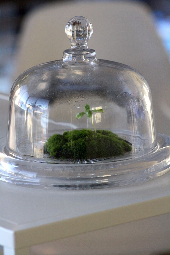I've had a go at making a dry climate & wet climate terrariums
