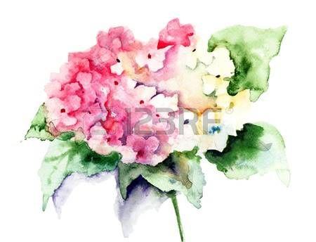 Bella ortensia rosa fiori, illustrazione acquerello photo