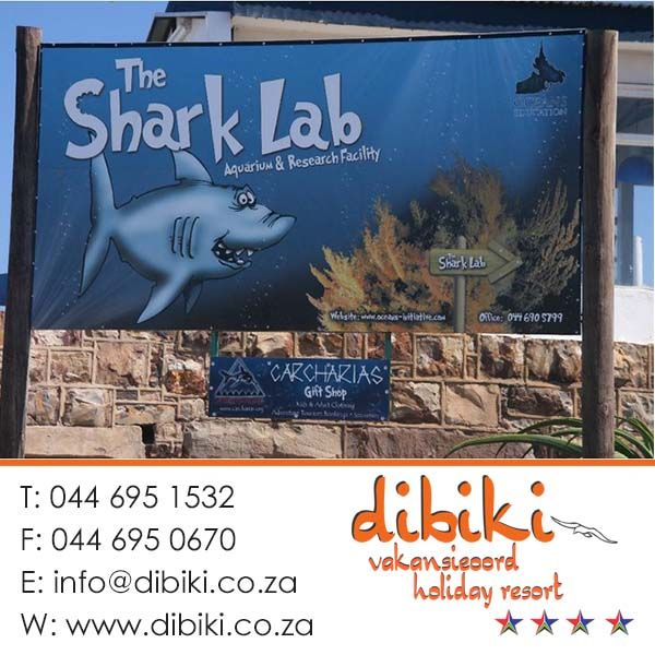 There are a lot of things to do in and around Mossel Bay and Dibiki Holiday Resort. The Shark Lab is a local aquarium that displays fish that can be found in Mossel Bay. It has a small benthic tank with pajama-jacket, leopard and puff adder shysharks. Stay with us for more. #activities #shark #mosselbay