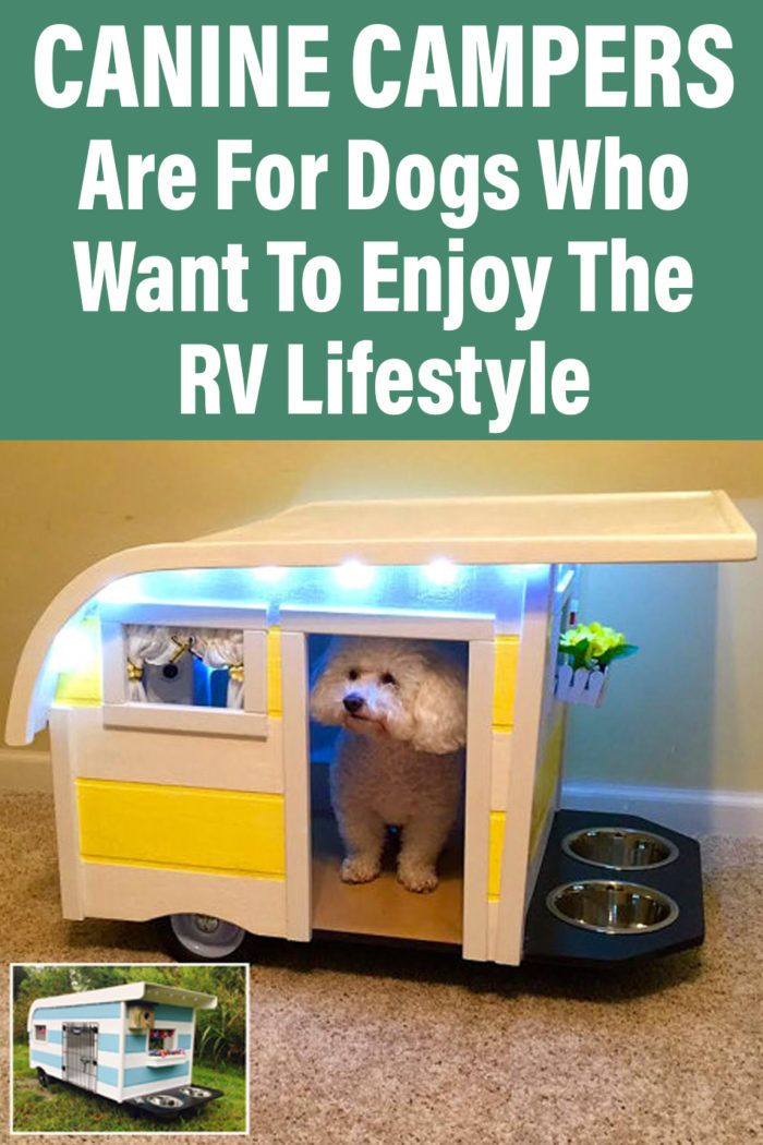 Canine Campers Are For Dogs Who Want To Enjoy The Rv Lifestyle In 2020 Rv Dog House Camper Dog Camper Pet