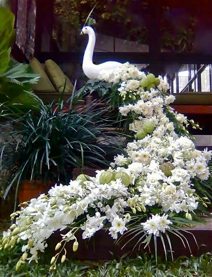White floral peacock