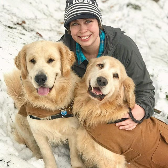 Golden Retriever Father And Son Enjoying A Winter Walk In Maine