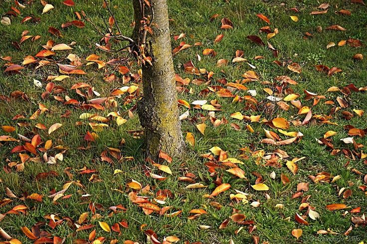 Fallen leaves by Giancarlo Gallo