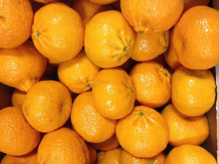 Mandarini (Citrus nobilis)