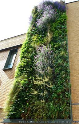 Vertical Garden | Westminster City School (BiotectureLtd)