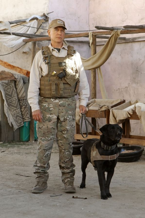 """Dog Duty in """"Seek"""" Episode 18 of Season 10  The wife of a Marine who specialized in K-9 bomb detection urges the NCIS team to investigate the recent death of her husband in Afghanistan, on NCIS, Tuesday, March 19 (8:00-9:00 PM, ET/PT) on the CBS Television Network. Pictured: Mark Harmon Photo: Monty Brinton/CBS ©2013 CBS Broadcasting, Inc. All Rights Reserved."""