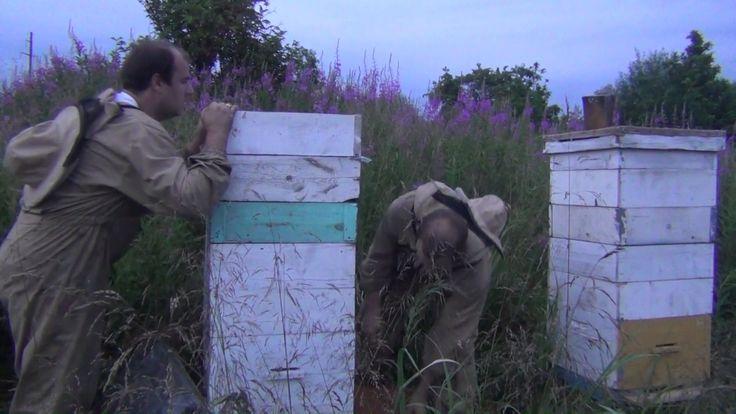 Подстановка дополнительных магазинных надставок пчелосемьям на кочевке. ...