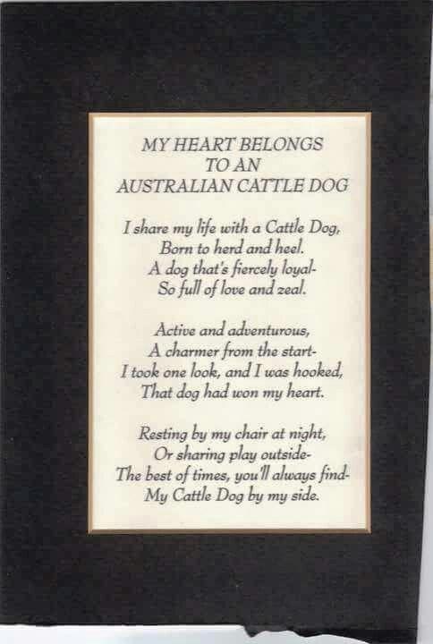 My Heart Belongs To An Australian Cattle Dog