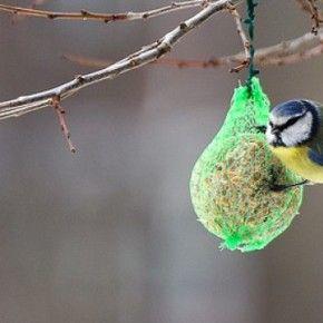 Aiutiamo i piccoli uccelli a sopravvivere al freddo. Ricetta per preparare le tortine, o palle di grasso. Ricetta e video