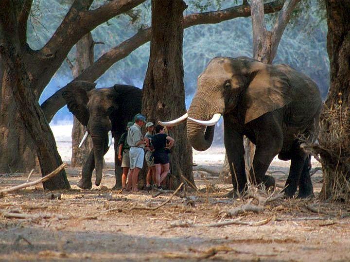 Mana Pools Walking Safari. Zimbabwe
