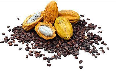 20 Cocoa Seeds,Cacao Seeds, Chocolate Nut Tree Theobroma cacao L.Free Ship