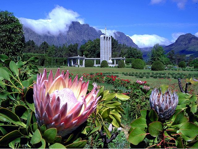 National Flower - the King Protea - and the Franschhoek Hugenot Monument