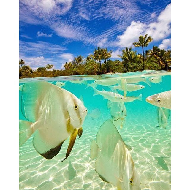 49 best private island images on pinterest maldives