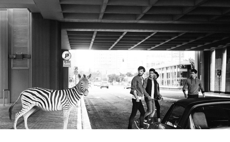 Wildlife by Daniel Cramer #wildlife #city #animals #phorography