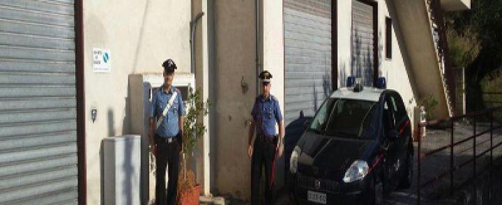 CILENTO: Arrestato insospettabile: nell'orto quaranta piante di marijuana alte 1,7 metri