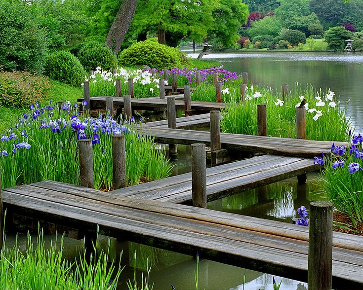 Water irises and boardwalk in a japanese garden japanese for Japanese garden water
