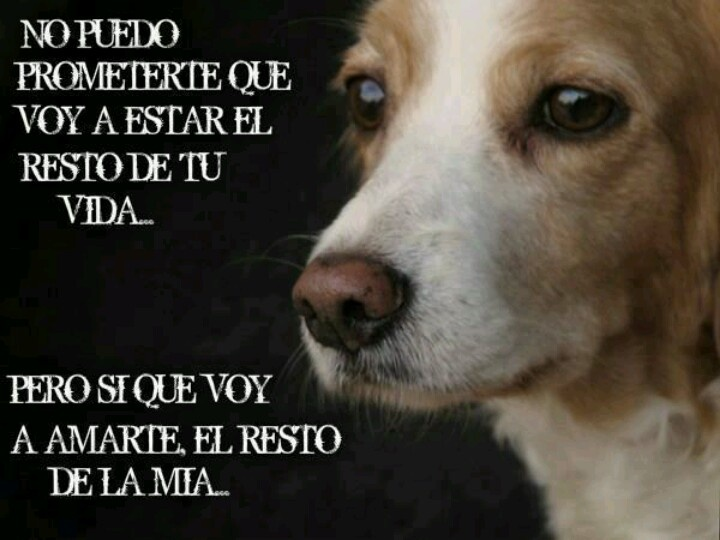 Frases De Amor Para Perro En Ingle: Amor, True Love And