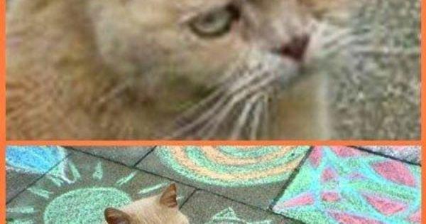 Gato mal humorado | gatos | Pinterest