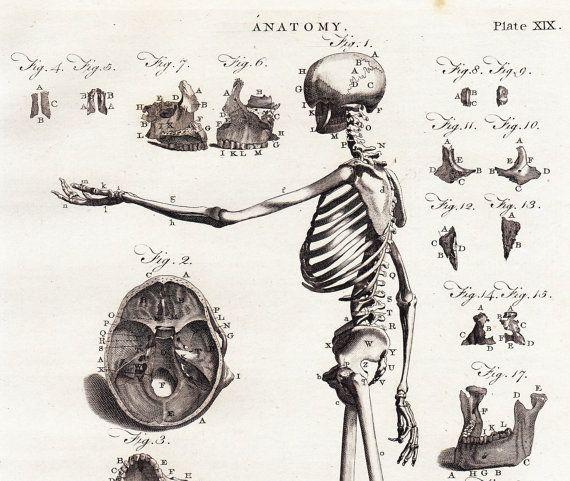 25+ best ideas about skull side view on pinterest | skull, Skeleton