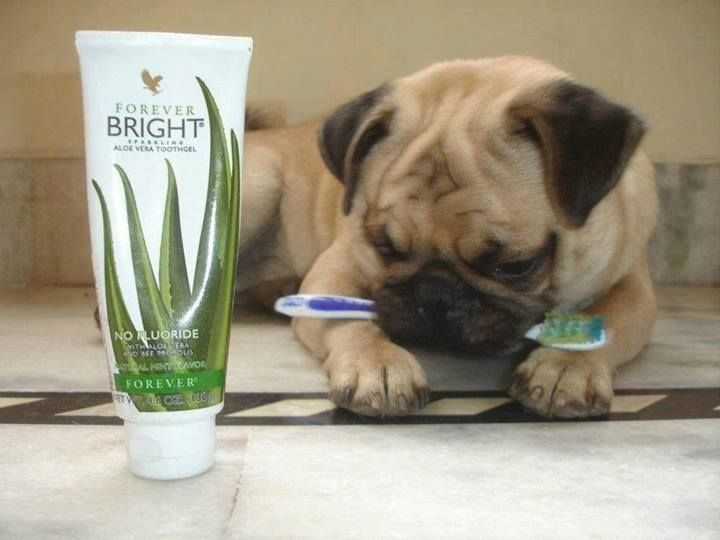 Aloe Bright tooth gel (for pets too!) This gentle, non-fluoride formula contains aloe vera and bee propolis to help to strengthen and protect teeth and gums whilst fighting plaque and whitening teeth. With no bleaching agents, children and adults will love it! Shop online www.gerborah-forever.myforever.biz/store