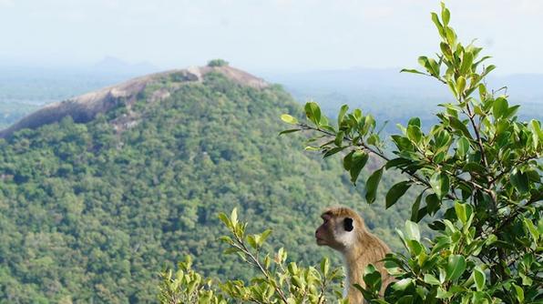 Sri Lanka - monkeys, elephants, beaches, sea turtles, colorful silk culture of India, Buddhist temples, and tea plantations.