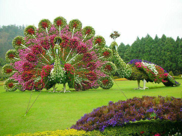 pavos reales de flores