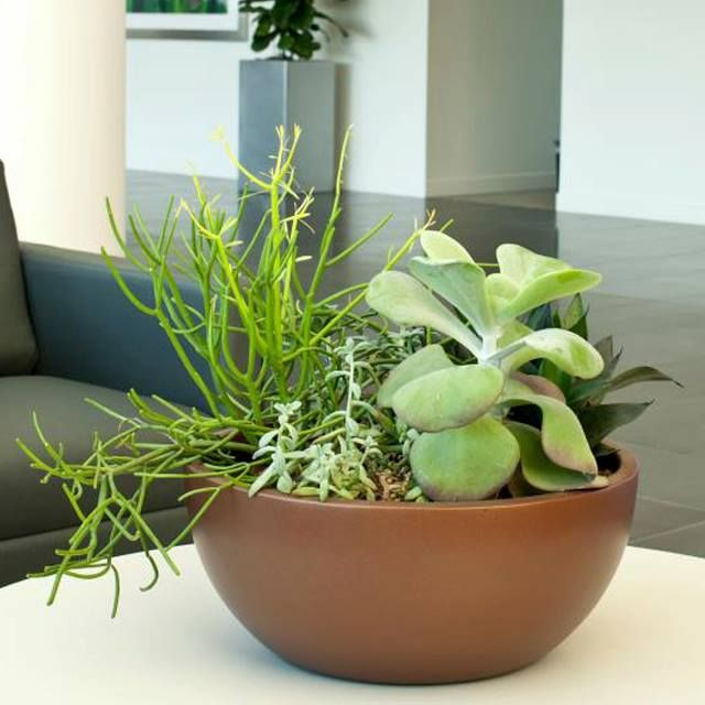 Tips And Ideas On Creating Your Own Tabletop Plant Arrangement Includes Succulents Ferns