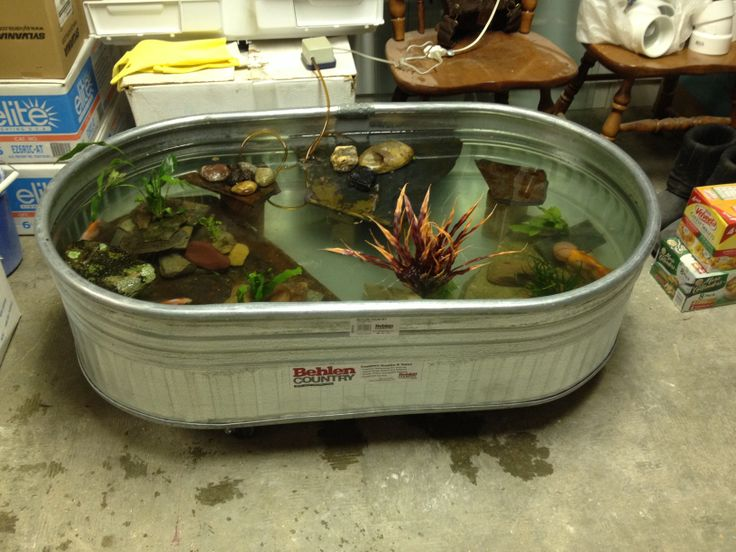 Ponds fish and fish ponds on pinterest for Indoor fish pond ideas