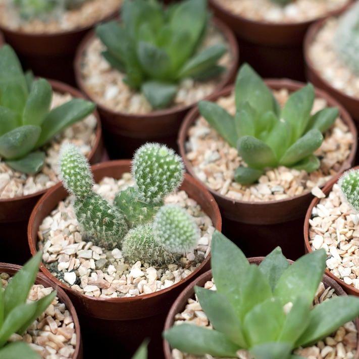 141 best Indoor Pflanzen, Pflege, Tipps images on Pinterest - tipps pflege pflanzen wintergarten