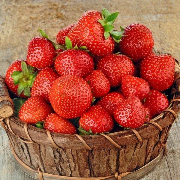 Dom i Sad, sadzonki truskawek, najlepsze sadzonki truskawek, sadzonki truskawek w promocji, internetowy sklep ogrodniczy