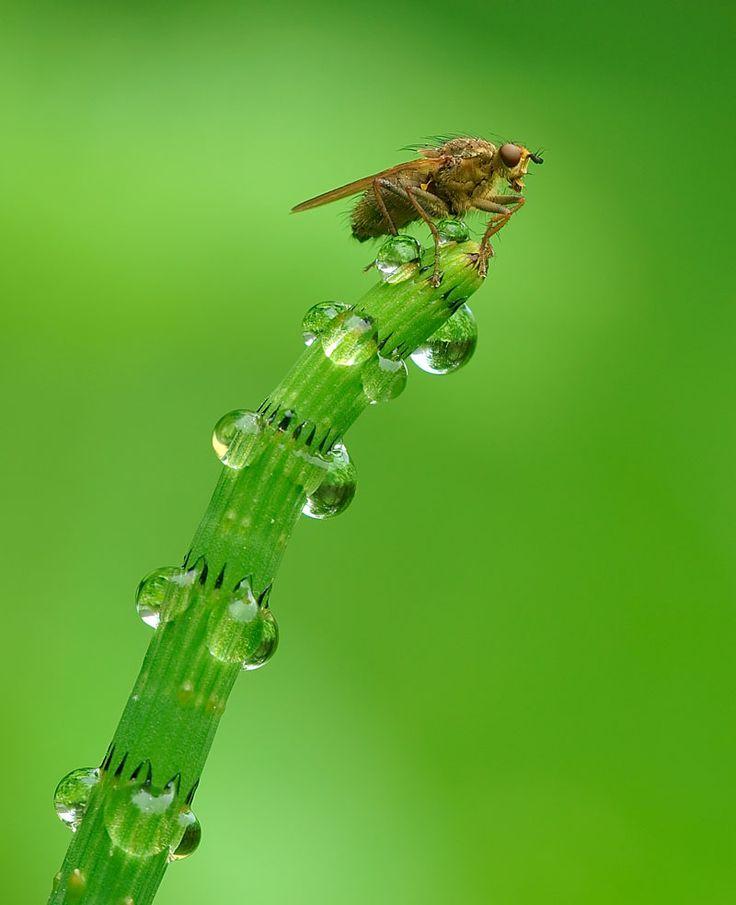 64 Best Morning Dew Images On Pinterest Morning Dew Macro