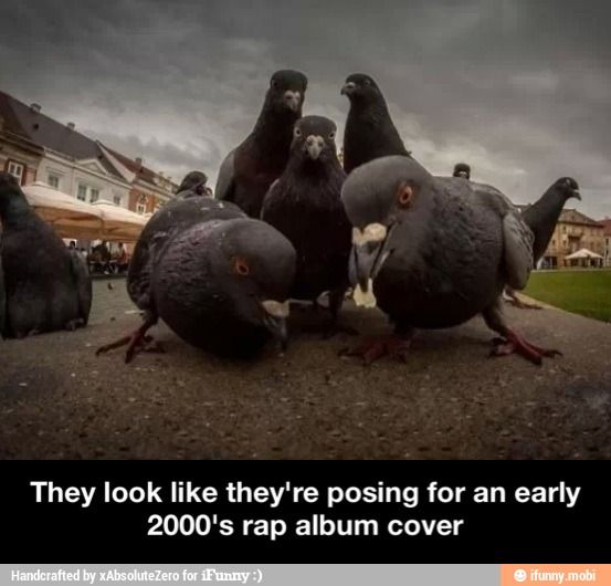 Rapping pigeons album cover