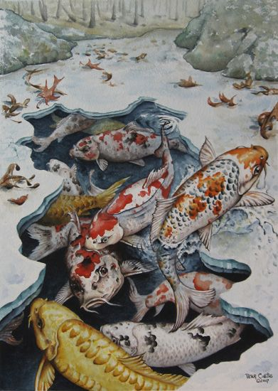 136 best images about fish on pinterest watercolors koi for Koi for sale houston