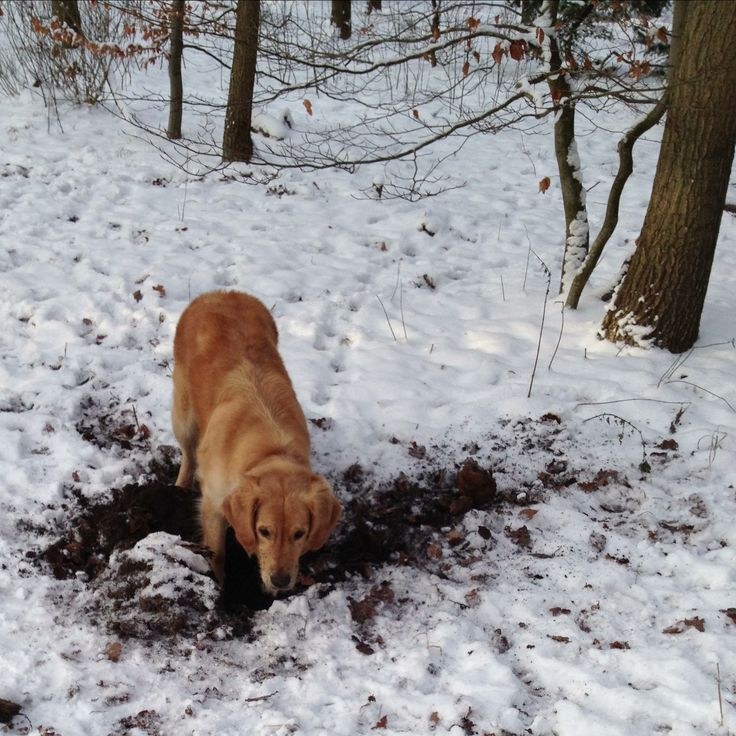 Mille digs a big hole