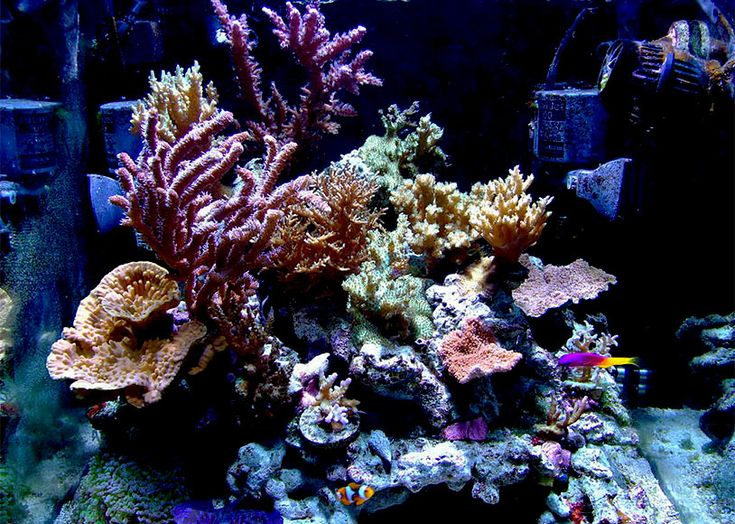 100 ideas to try about fish tanks saltwater fish tanks for Aquarium recifal nano