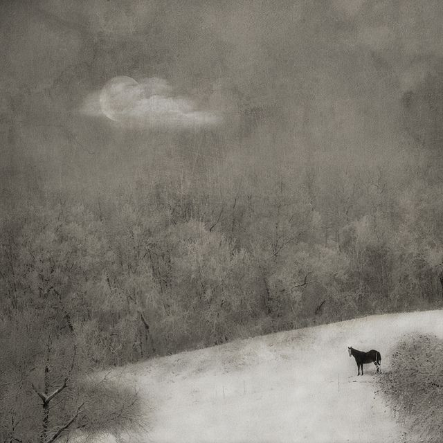 A Shadow of Winter by jamie heiden, via Flickr